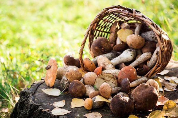 Все грибы по пищевой ценности разделены на 4 категории