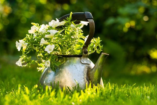 Петунии в саду: идеи размещения