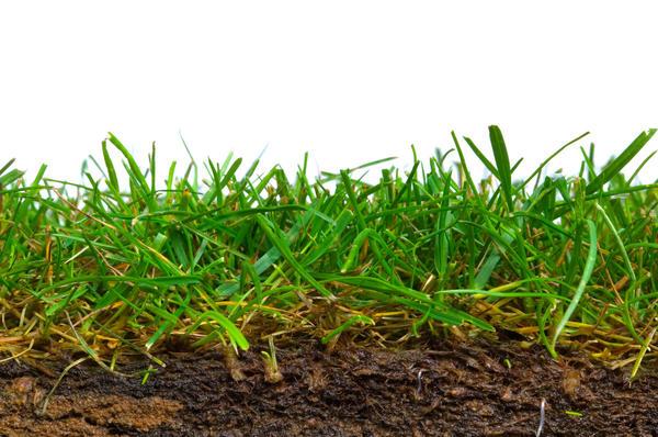 Со временем почва на газоне уплотняется настолько, что корням становится трудно дышать