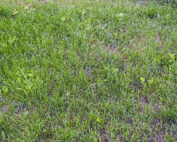 Посев газона лучше доверить профессионалам