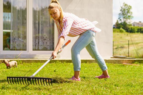 Не стоит вычесывать газон огородными граблями!