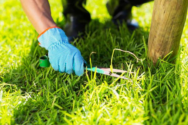 Чтобы газон был действительно красив, его стрижка должна быть безупречной