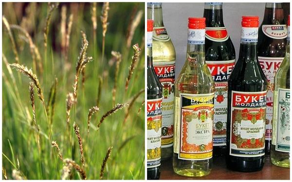 Душистый колосок. Фото с сайта wikimedia.org. Вино Букет Молдавии в состав которого он входит. Фото с сайта s10.stc.all.kpcdn.net