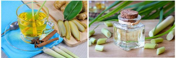 Лемонграсс придает уникальный аромат чаю, а эфирное масло этого растения добавляют в средства по уходу за кожей и волосами