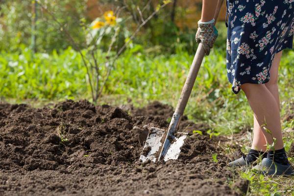 Мне всегда нравилось перекапывать огород вручную
