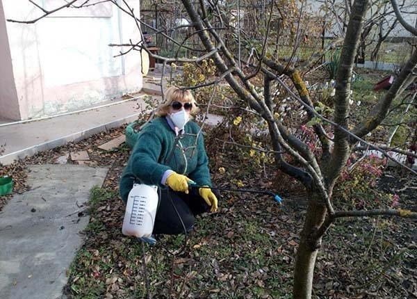 7 вопросов дачников об опрыскивании сада. Спрашивали? Отвечаем!