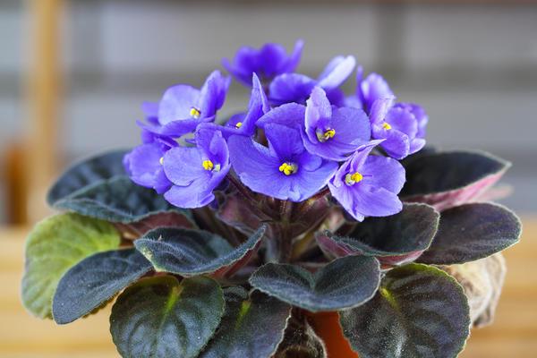 Подкармливать домашние цветы следует гораздо чаще, чем нам порою кажется