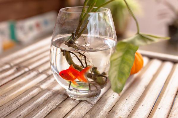 Прекрасной альтернативой покупным удобрениям может стать обыкновенная аквариумная вода