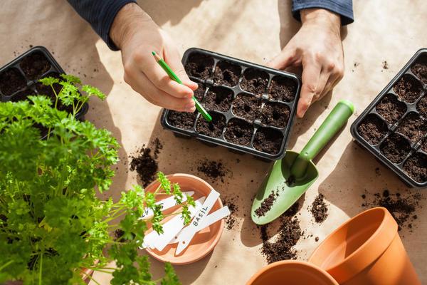 В январе на рассаду можно посеять многие растения