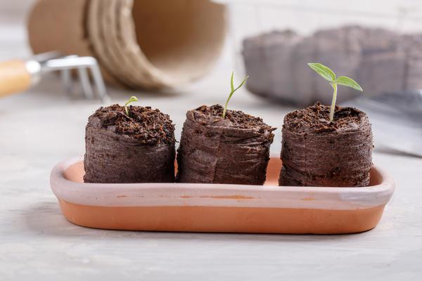 Чтобы семена взошли быстро - создайте для них оптимальные условия