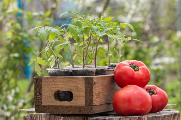 Сколько овощей нужно на семью из пяти человек?