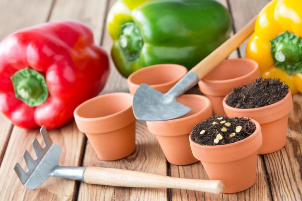 Выращивание добротной рассады перца и томата - вопрос далеко не праздный