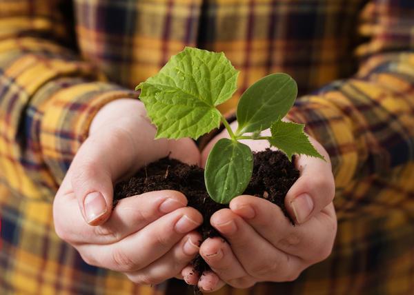3 необычных способа посева огурцов. Действительно ли они эффективны?