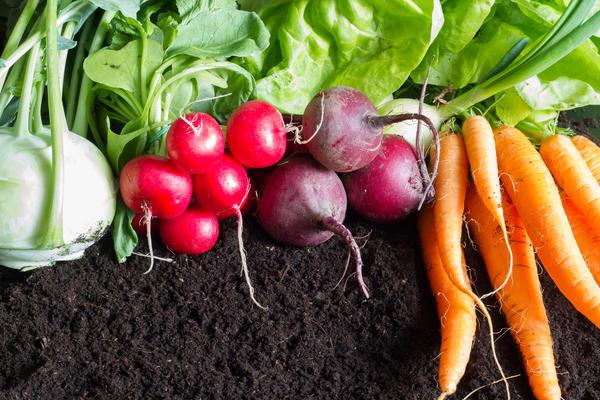 Экомик Урожайный и почву оздоровит, и органическими продуктами обеспечит