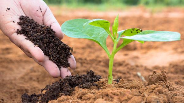 Учитывайте тип почвы на вашем участке