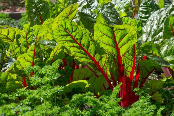 Подбираем «огненные» растения для декоративного огорода