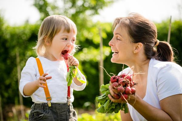 Вкусный редис может вырастить каждый