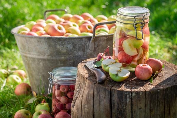 Из опавших яблок можно сделать отличные заготовки
