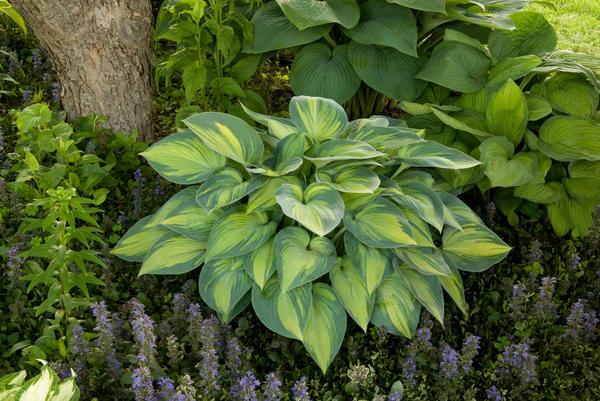 Самые неприхотливые: выбираем растения для клумбы, которым не нужен особый уход