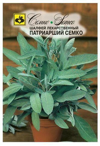 Шалфей лекарственный, сорт Патриарший Семко