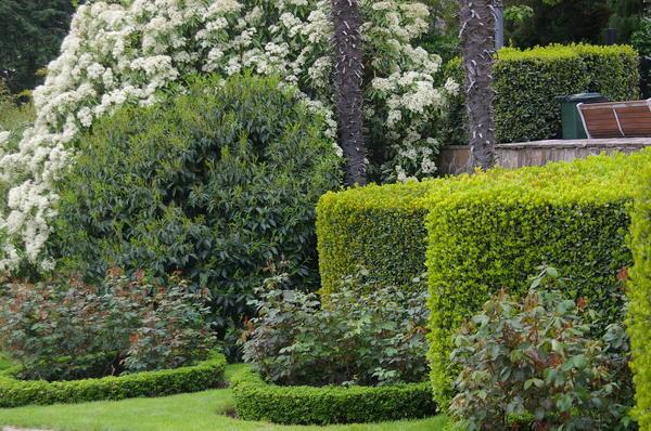 Фрагмент сада, где царствуют стриженые растения. Фото автора