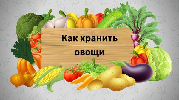 Условия и сроки хранения овощей: шпаргалка для огородника