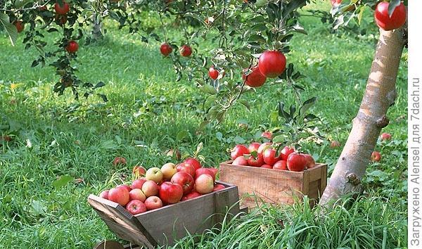 Бактериальное удобрение, урожайность