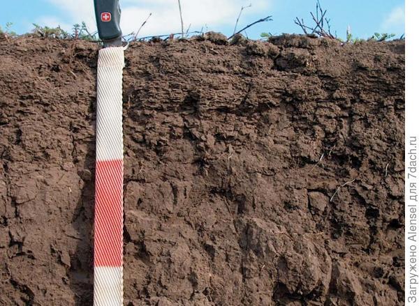 Сверхмощный чернозём, глубина залегания гумуса - 1.5 м