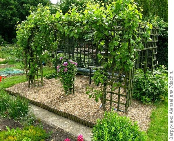 Южное место высадки винограда