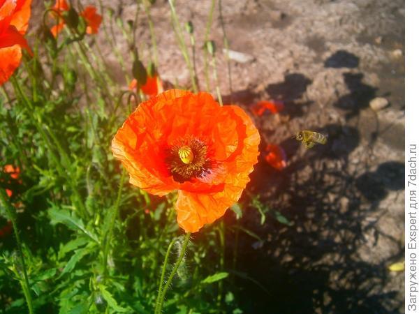 пчела на подлете