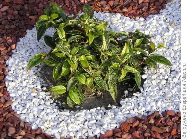 посадка растений в гравийном саду