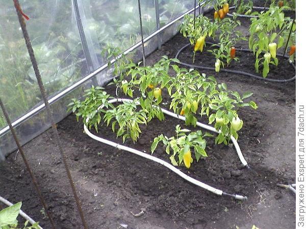 система выращивания и полива