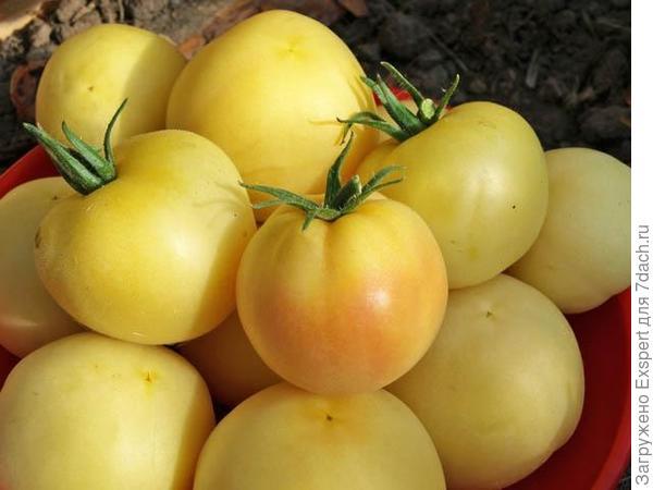 Белоплодные томаты. Фото с сайта http://derevnyaonline.ru