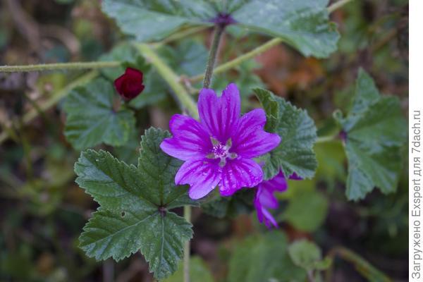 Цветы осени - дикоросы