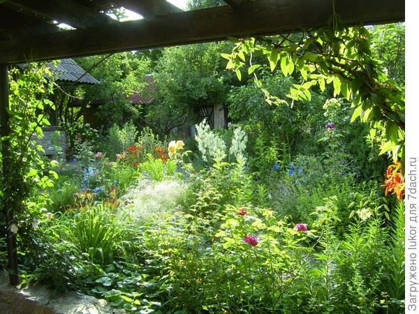 Сад стал садом