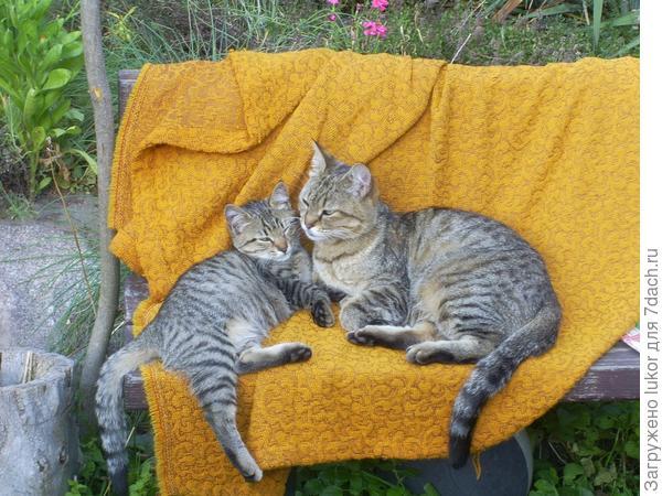 Наша Кота с маленькой заместительнцей