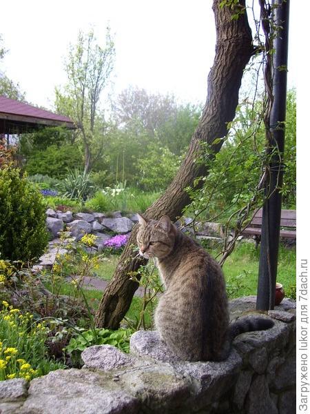 Кошка Кота в своих владениях