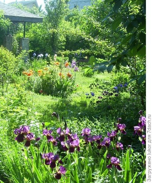 Выбор стиля сада