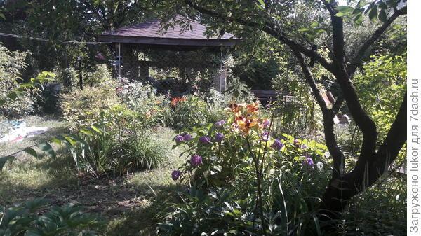 Глоток тени для сада
