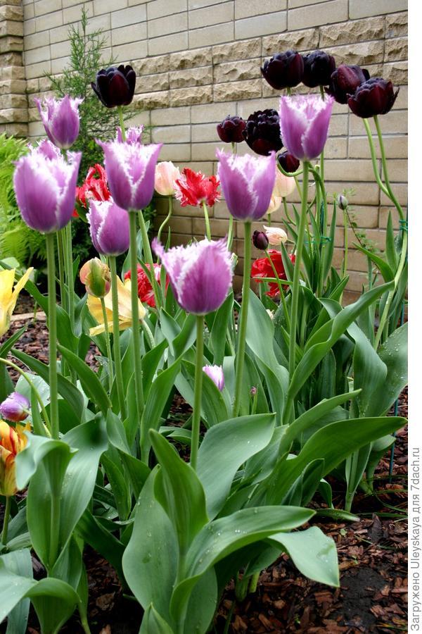 Тюльпаны и стиль модерн