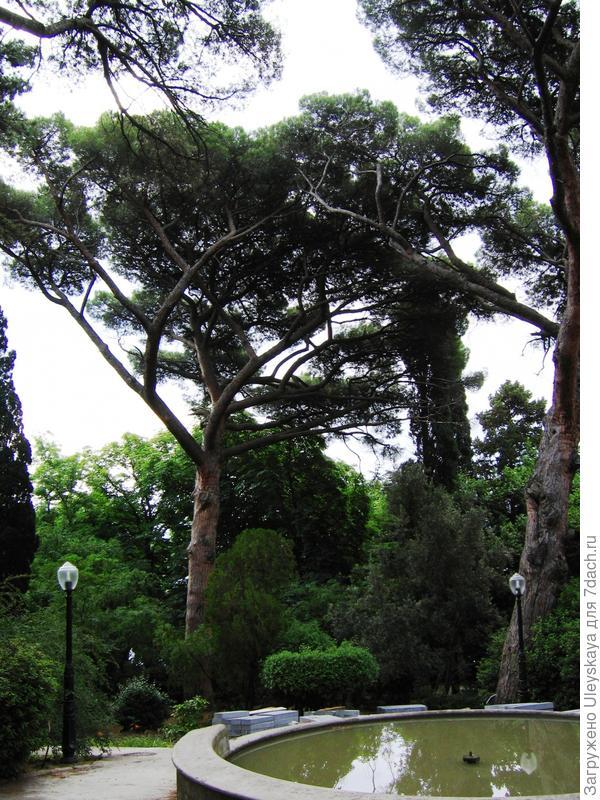 Старинный парк в Гурзуфе (Крым)