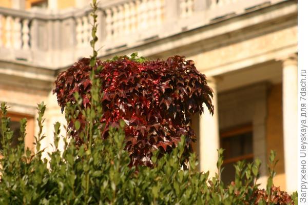 Дом с виноградом