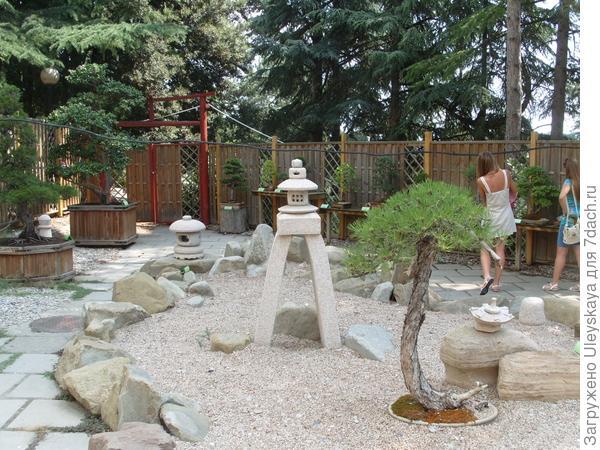 На выставке бонсай