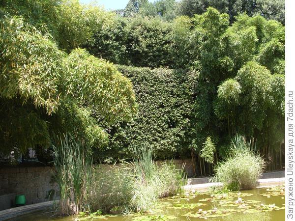Живая стена из дуба каменного - объёмный архитектурно-художественный элемент