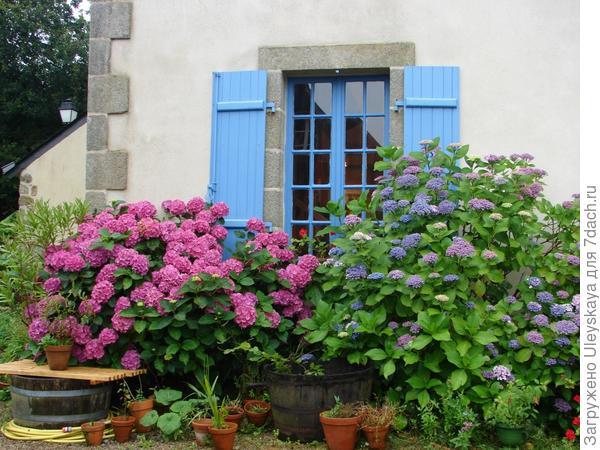 Комбинированная живая изгородь на юге Франции