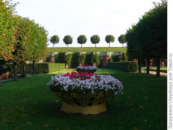 Живая изгородь - роскошное убранство старинной усадьбы