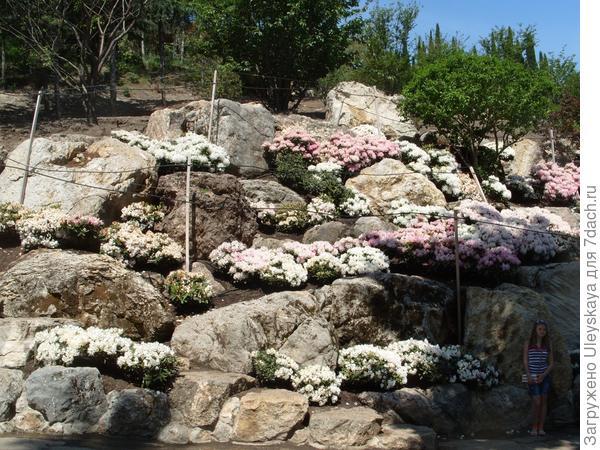 Каменистый сад в японском стиле занимает немалую площадь