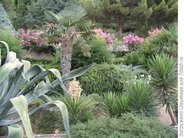 Ряды растений на террасах.
