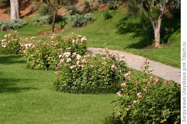 Розы в античном саду.