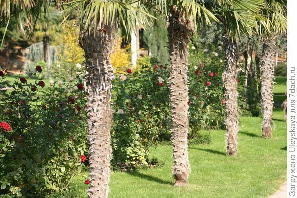 Античный сад в ЛОК Айвазовское